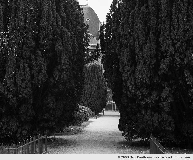 Common cypress line paths of the Carré de la Perspective, Jardin des Plantes, Paris, France, 2008 by Elise Prudhomme