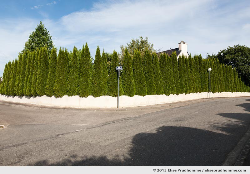 Cypress palisade in the suburbs, Giupavas, France, 2013 by Elise Prudhomme