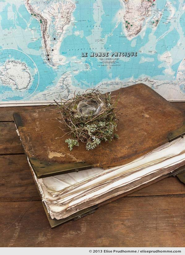 Elements of The Physical World arranged as a still life: world map, bird's nest, book, Normandy, France, 2013 by Elise Prudhomme