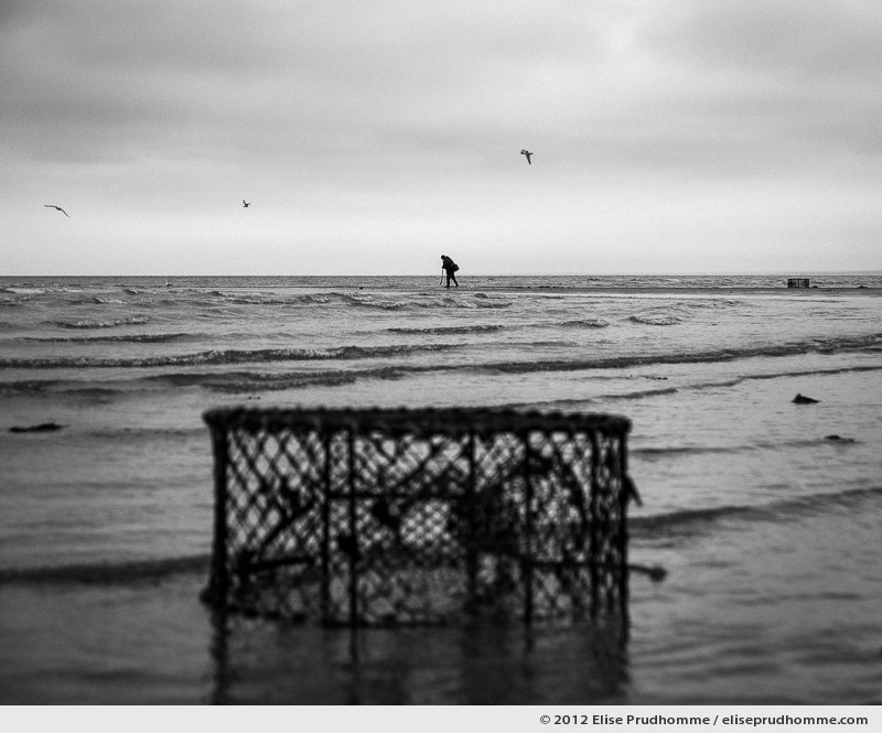 Fishing on foot for clams at low tide, Granville, France, 2012 by Elise Prudhomme.