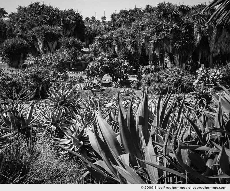 Palm grove of Botanicactus, botanical garden near the town of Ses Salines, Mallorca, Spain, 2009 by Elise Prudhomme