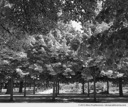 Canopée or Canopy, Tuileries Garden, Paris, France, 2011 (part of the series Yours, Mine, Le Nôtre's) by Elise Prudhomme.