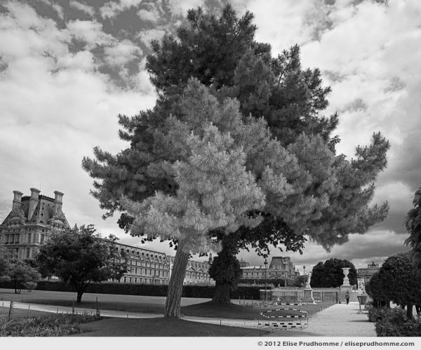 Nuage or Cloud, Tuileries Garden, Paris, France, 2011 (part of the series Yours, Mine, Le Nôtre's) by Elise Prudhomme.