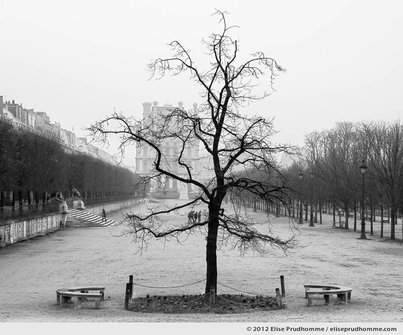 Liberté or Liberty, Tuileries Garden, Paris, France, 2011 (part of the series Yours, Mine, Le Nôtre's) by Elise Prudhomme.