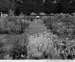 Potager or Vegetable Patch, Tuileries Garden, Paris, France, 2012 (part of the series Yours, Mine, Le Nôtre's) by Elise Prudhomme.