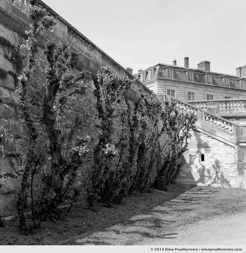 Lower Terrace of the Château, Saint-Cloud Park, France, 2014 (series Yours, Mine, Le Nôtre's) by Elise Prudhomme.
