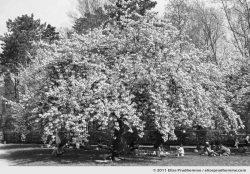 Bosquet Nord, Parc de Sceaux, France, 2011 (series Yours, Mine, Le Nôtre's) by Elise Prudhomme.