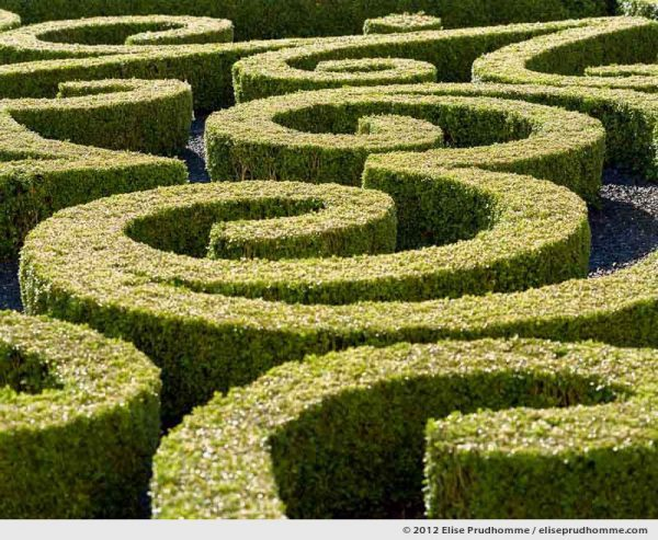 Detail of formal boxwood parterre, Brecy Castle Gardens, Saint Gabriel Brécy, France. 2012 (series Notable Gardens of France) by Elise Prudhomme.