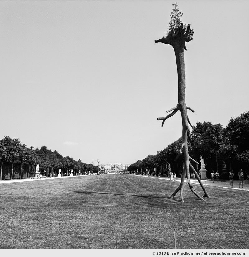 Penone, Versailles Chateau Garden, France, 2013 (part of the series Yours, Mine, Le Nôtre's) by Elise Prudhomme.