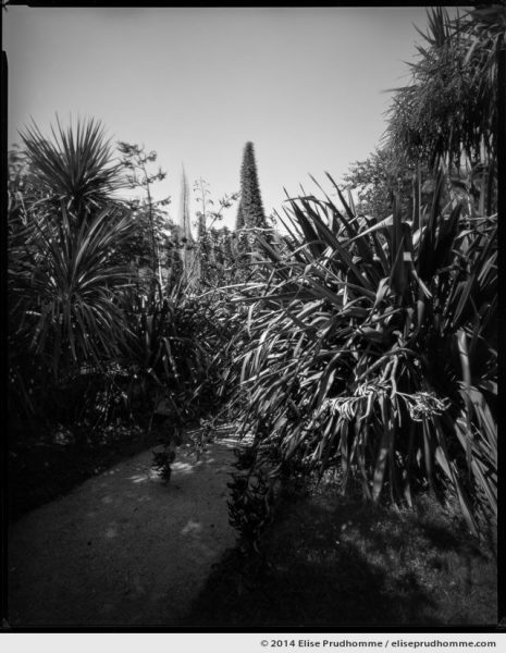 Echiums and path, Jardin d'Acclimatation, Tatihou Island, Saint-Vaast-la-Hougue, France. 2014 (series Sands of Time) by Elise Prudhomme.