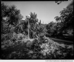 Jardin d'Acclimatation, Tatihou Island, Saint-Vaast-la-Hougue, France. 2014 (series Sands of Time) by Elise Prudhomme.