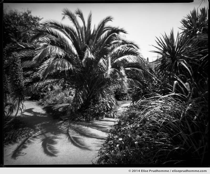 Palm tree and echiums in the Jardin d'Acclimatation, Tatihou Island, Saint-Vaast-la-Hougue, France. 2014 (series Sands of Time) by Elise Prudhomme.