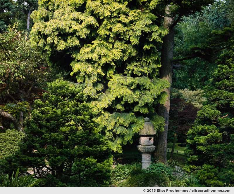 Japanese Village #3, Albert Kahn Garden, Boulogne-Billancourt, France, 2013 by Elise Prudhomme.