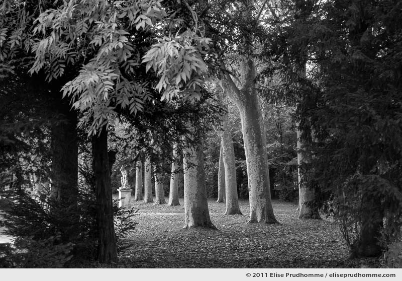 Le tigre, Parc de Sceaux, France. 2012 (series Yours, Mine, Le Nôtre's) by Elise Prudhomme.