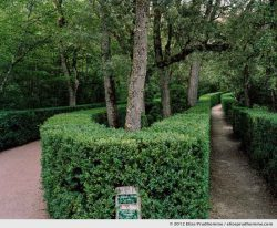 Path to the Belvedere, The Suspended Gardens of Marqueyssac, Vezac, France (series Notable Gardens of France) by Elise Prudhomme.
