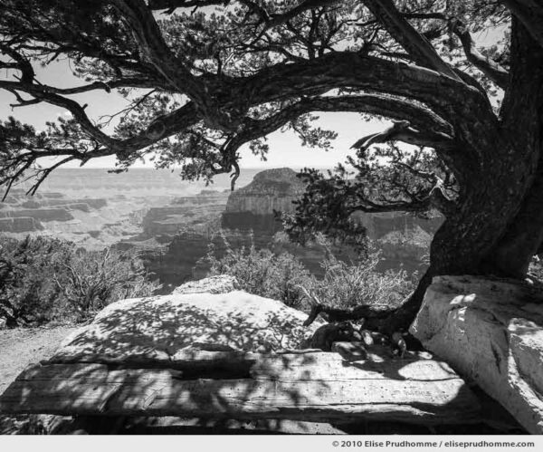 Ponderosa pine and scenic overlook, Grand Canyon, Arizona, USA. 2010 (series Wild Wild West) by Elise Prudhomme.