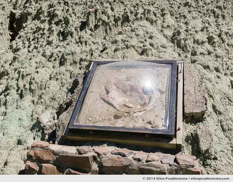 Fossil under cover, Sheep Rock Unit, Blue Basin Overlook Trail, John Day, Oregon, USA. 2014 (series Wild Wild West) by Elise Prudhomme.