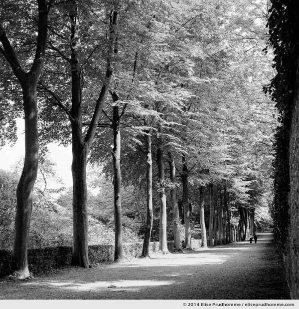 Promenade in a tree-lined alley of Saint-Cloud Park, France, 2014 (series Yours, Mine, Le Nôtre's) by Elise Prudhomme.