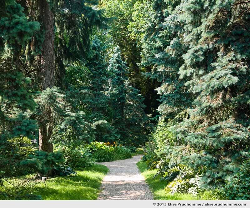 The Blue Forest, Albert Kahn Garden, Boulogne-Billancourt, France, 2013 by Elise Prudhomme.
