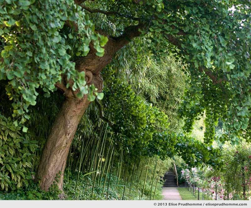 The Rose Garden #1, Albert Kahn Garden, Boulogne-Billancourt, France, 2013 by Elise Prudhomme.