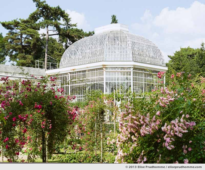 The Rose Garden #3, Albert Kahn Garden, Boulogne-Billancourt, France, 2013 by Elise Prudhomme.