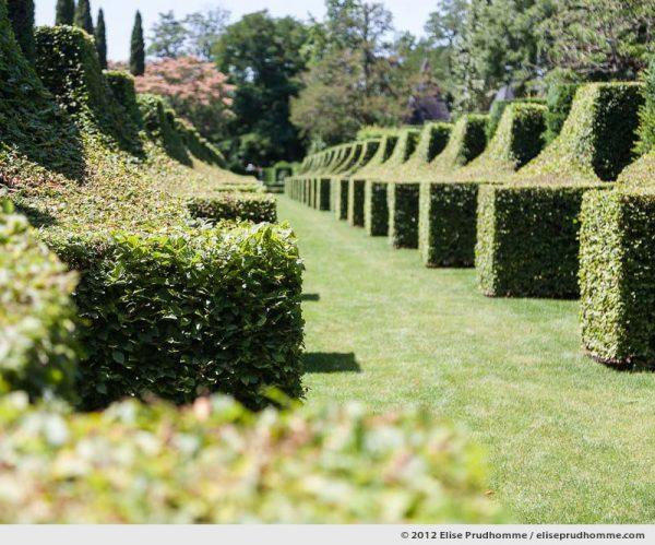 Topiary study #1, Les Sculptures Végétales, Eyrignac Gardens, Salignac-Eyvigues, France, 2012 by Elise Prudhomme.