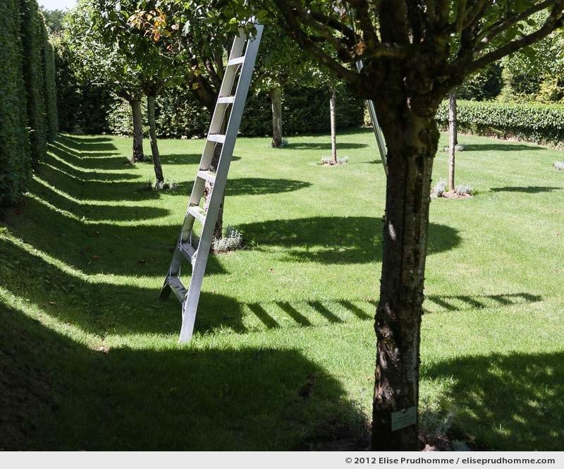 Topiary study #2, Eyrignac Gardens, Salignac-Eyvigues, France, 2012 (series Notable Gardens of France) by Elise Prudhomme.