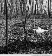 À découvert [Exposed], Pennsylvania, USA (series Exposed - À découvert) by Elise Prudhomme.