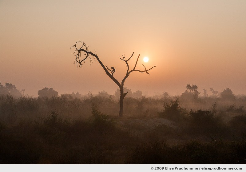 A bird in a bare tree during sunrise on Keoladeo Ghana National Park, Bharatpur, India, 2009 by Elise Prudhomme.