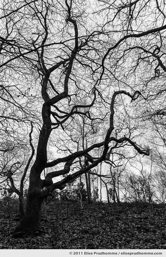 Bare tree branches in wintertime, Anse de Brick Forest, France, 2011 by Elise Prudhomme.