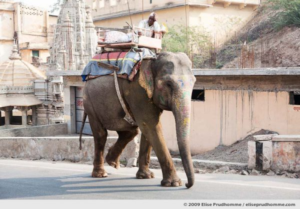 Colorfully decorated elephant and master leaving Amber Fort, Amer, Rajasthan, India, 2009 by Elise Prudhomme.