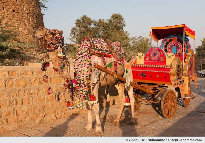 Decorated camel and cart waiting for passengers outside the walls of Jaisalmer, Rajasthan, India, 2009 by Elise Prudhomme.