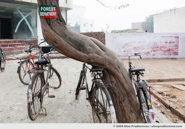 Four parked bicycles and a tree marked Forest Department, Agra, Uttar Pradesh, India, 2010 by Elise Prudhomme.