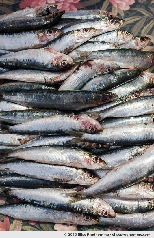 Fresh sardines ready to grill on the barbecue, Normandy, France, 2010 by Elise Prudhomme
