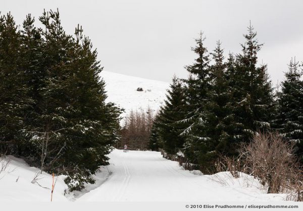 Groomed cross-country ski trails in winter fir forest, Banne d'Ordanche, Auvergne, France, 2010 by Elise Prudhomme.