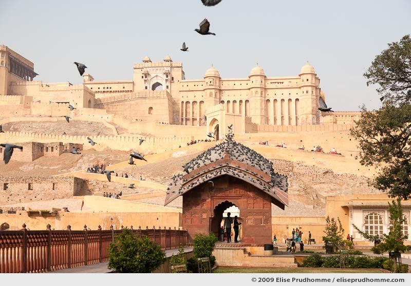 Low-angle view of Amer Fort from Maotha Lake, Amer, Jaipur, Rajasthan, India, 2009 by Elise Prudhomme.