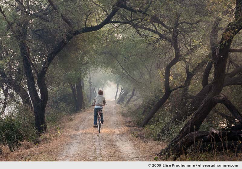 One boy riding a bicycle in Keoladeo Ghana National Park during winter at sunrise, Bharatpur, India, January 1, 2010 by Elise Prudhomme.
