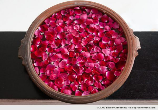Rose petals floating in a terra cotta bowl welcome guests at boutique hotel B-Nineteen, Delhi, India, 2009 by Elise Prudhomme.