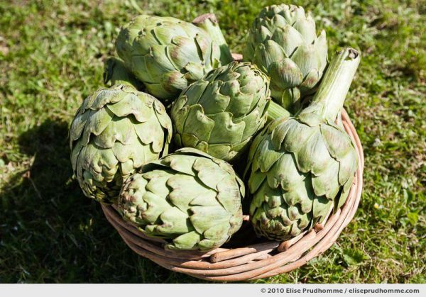Six artichokes (Cynara cardunculus) in a basket on the grass, Normandy, France, 2010 by Elise Prudhomme.