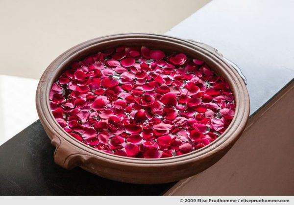 Rose petals floating in a terra cotta bowl welcome guests at boutique hotel B-Nineteen, Delhi, Northern India, 2009 by Elise Prudhomme.
