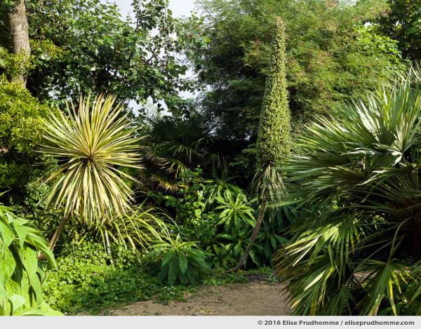 Cabbage Palm, palms and echiums in the Jardin d'Acclimatation, Tatihou Island, Saint-Vaast-la-Hougue, France.