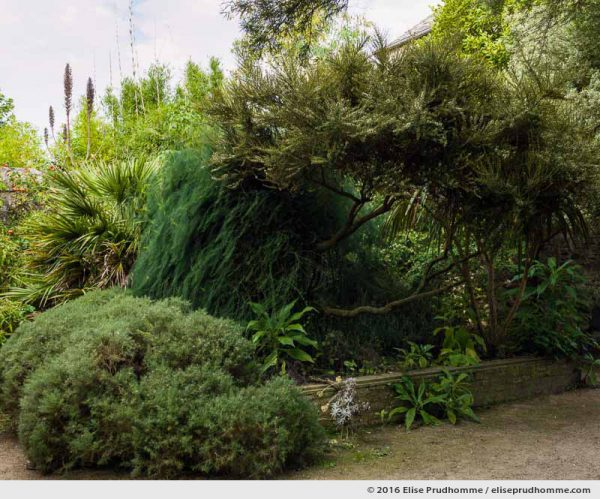 Delicate mixture of vegetation in the Jardin d'Acclimatation, Tatihou Island, Saint-Vaast-la-Hougue, France