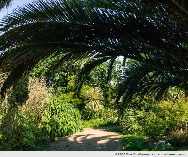 Palm fronds in the Jardin d'Acclimatation, Tatihou Island, Saint-Vaast-la-Hougue, France.