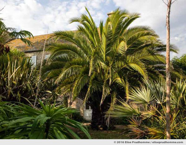 Palm tree, echiums pinanana and lodging house in the Jardin d'Acclimatation, Tatihou Island, Saint-Vaast-la-Hougue, France