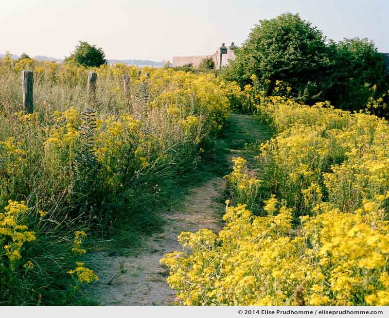 Western path bordering the bastion walls, Tatihou Island, Saint-Vaast-la-Hougue, France.