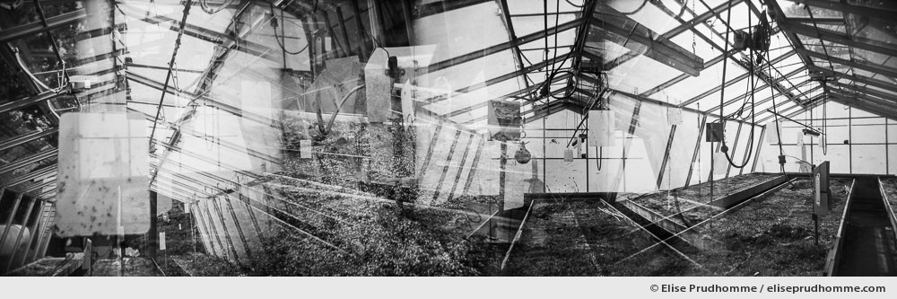 Black and white photograph of a greenhouse interior in Pennsylvania, USA.  Series entitled Lieux-dits by Elise Prudhomme.