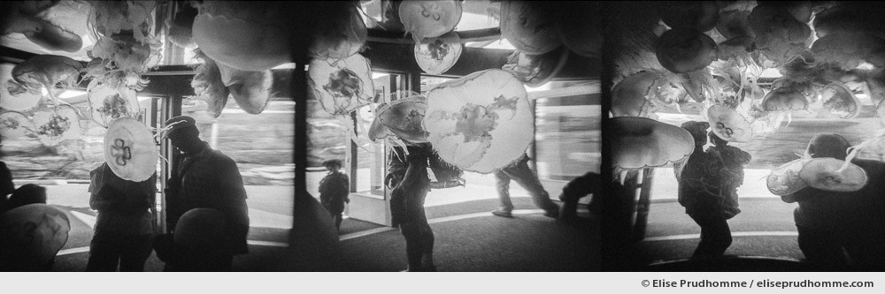 Black and white photograph of jellyfish and visitors, Newport Aquarium, Oregon, USA.  Series entitled Lieux-dits by Elise Prudhomme.