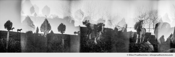 Black and white photograph of horses running in an enclosure, Rome, Italy. Analog photography series entitled Lieux-dits by Elise Prudhomme.