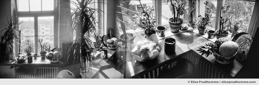Black and white photograph of succulents in a minimalist style kitchen using house plants for interior decoration. The family Cactaceae in Karlsruhe, Germany.  Analog photography series entitled Lieux-dits by Elise Prudhomme.