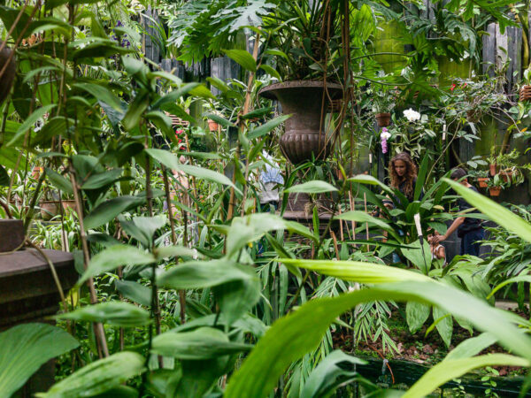 Inside the greenhouse orchid collection installed by Patrick Pottier at the Château du Champ de Bataille, Normandy, France.